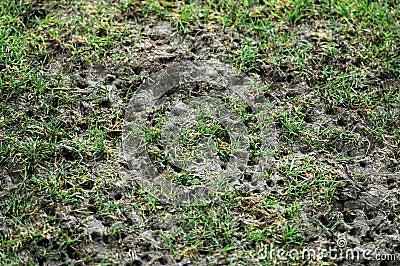 Damaged pitch