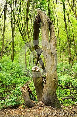 Damaged tree Stock Photo