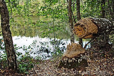 Damaged tree in wood