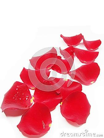 gold frame rose petals - photo #12