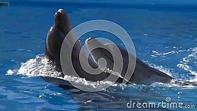 Dança do golfinho video estoque