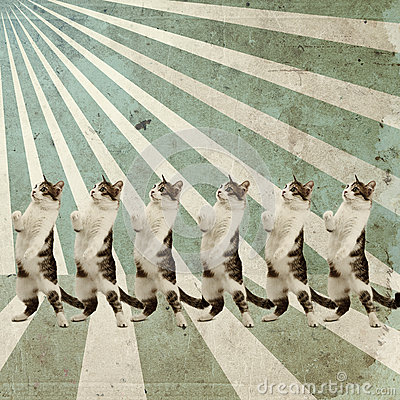 Free Dancing Cats Retro Poster Royalty Free Stock Images - 26415859
