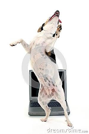 Free Dancing Dog Royalty Free Stock Photo - 197035