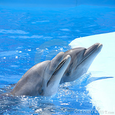 Free Dancing Dolphins Stock Images - 16548964