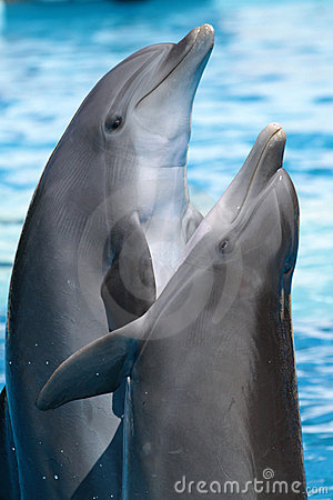 Free Dancing Dolphins Stock Photography - 20290842
