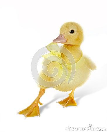 Dancing ducky