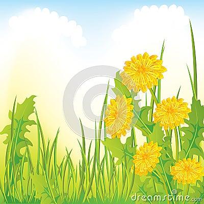 Dandelion łąka