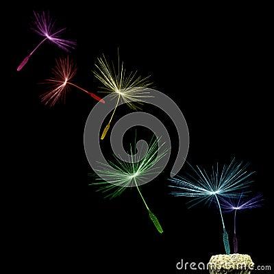 Free Dandelion Stock Image - 10567161