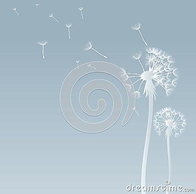 Free Dandelion Stock Photo - 11767660