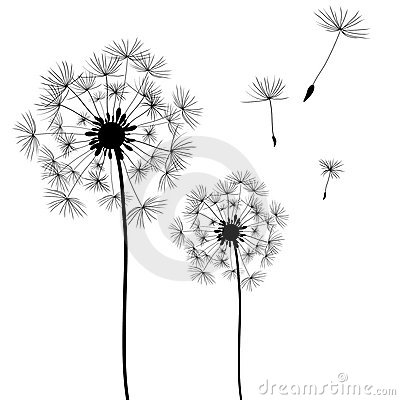 Free Dandelion Royalty Free Stock Photo - 15888315