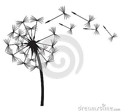 Free Dandelion Royalty Free Stock Photo - 29482705