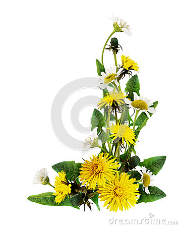 Free Dandelion And Daisy Flowers Corner Arrangement Stock Photo - 89986910