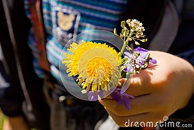 Dandelion in child hands