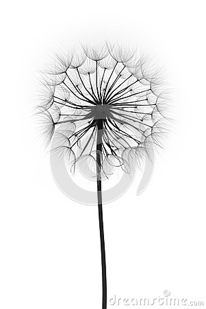 Free Dandelion Flower Stock Photo - 46997270
