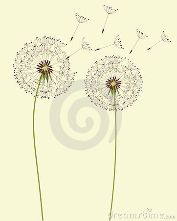 Free Dandelion Flowers Stock Images - 18476084