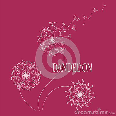 Free DANDELION. Flying In The Wind, The Parachutes. Royalty Free Stock Photography - 94556257