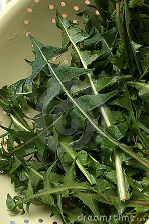dandelion leaves prepared for a salad