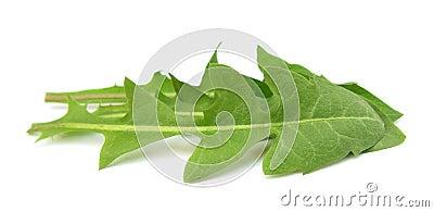 Dandelion leaves salad