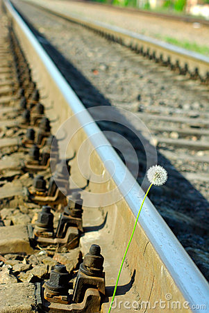 Dandelion and rails