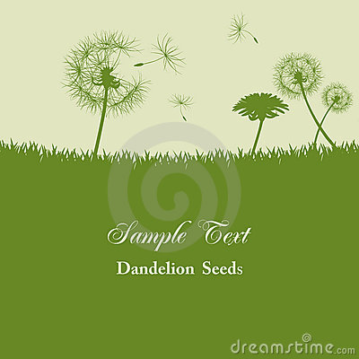 Dandelion seeds background