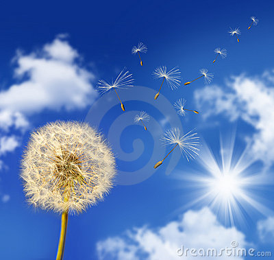 Free Dandelion Seeds Blowing In The Wind Royalty Free Stock Images - 6789299