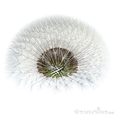Dandelion seeds viewed under, detached. 3d Render