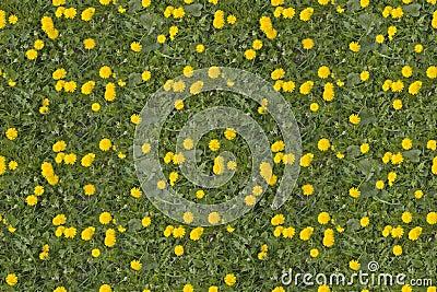 Dandelion tiled texture