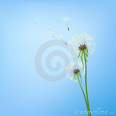 Free Dandelions Royalty Free Stock Photography - 4974557