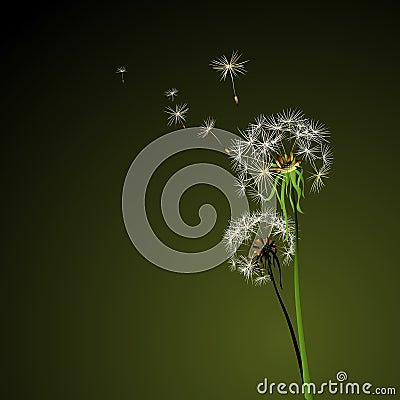 Free Dandelions Stock Image - 5416151