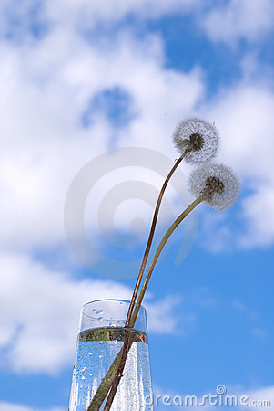 Free Dandelions In The Sky Royalty Free Stock Photography - 3249227