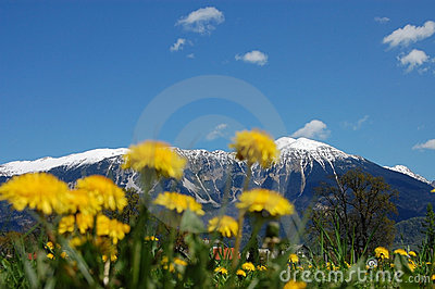 Dandelions and the Mountains