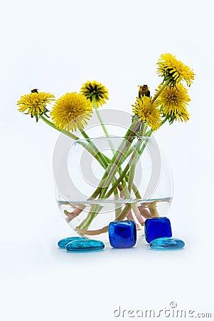 Dandelions in a round vase