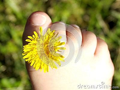 Dandy toes