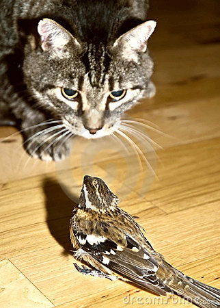 Danger/ Cat and Bird