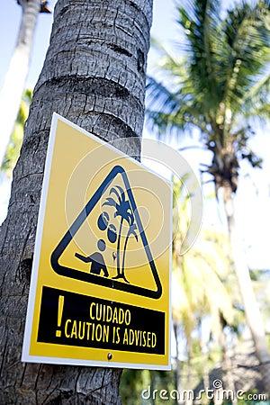 Danger: falling coconuts