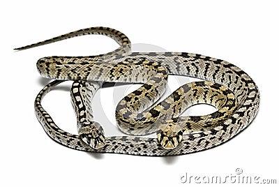 Dangerous snakes.