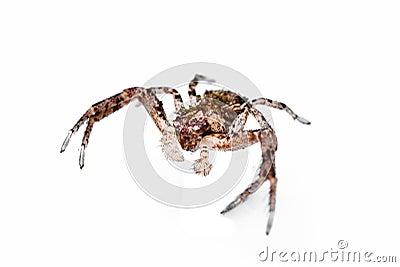 Dangerous spider.