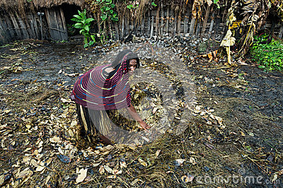 Dani woman preparing pit for pig feast. Editorial Stock Image
