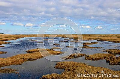 Danish bog land