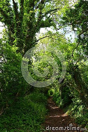 Danish forest path