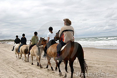 Danish Horses On The Beach Royalty Free Stock Photography - Image: 831407