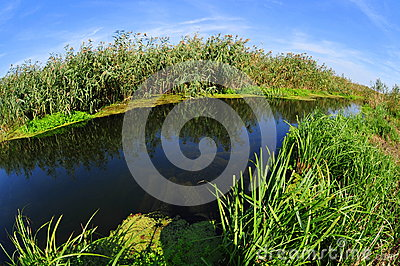 Danube delta water channel and vegetation
