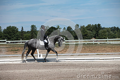 Dapple Gray Dressage Horse and Rider at a show