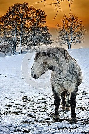 Dapple grey horse at winter sunset