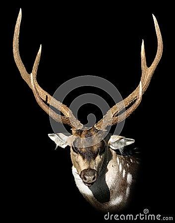 Dappled deer