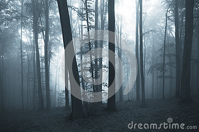 Dark blue fog in a thick forest