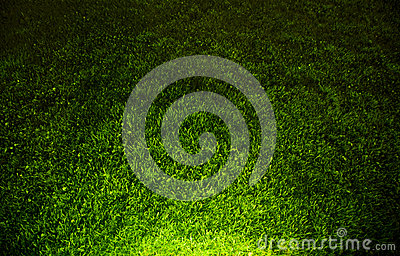 Dark contrasted green grass background