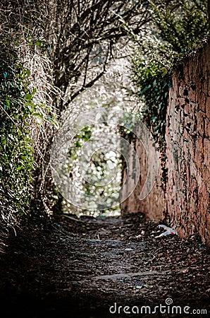 Dark creepy forest with sunlight Stock Photo