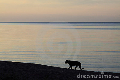 Dark dog on the sea shore