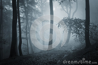 Dark forest with blue fog in late autumn